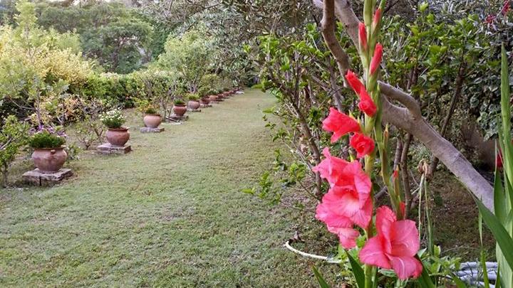 gladioli-prato-vasi-villa-giardino