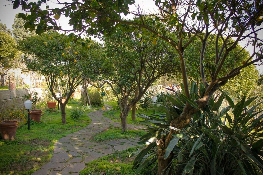 citricos-jardin-limon-messina-villa