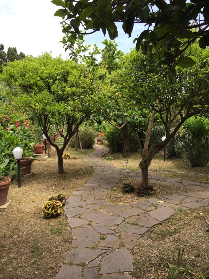 limoni-arance-ecoligico-sentiero-messina-sicilia