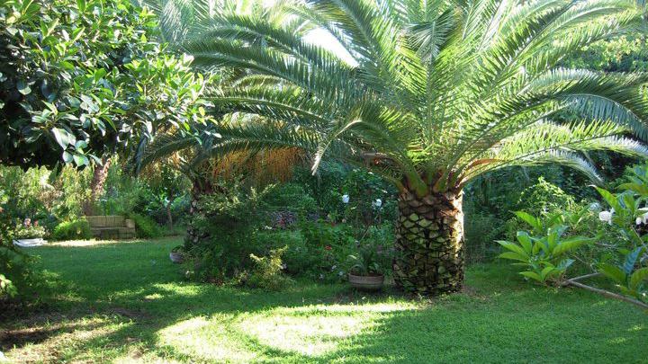 giardino-palma-prato-villa-messina