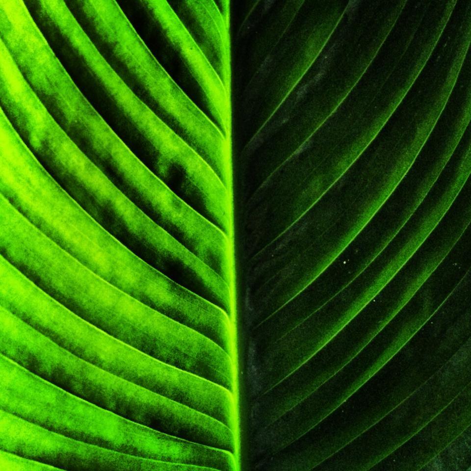 foglia-verde-andrea-labruto.jpg