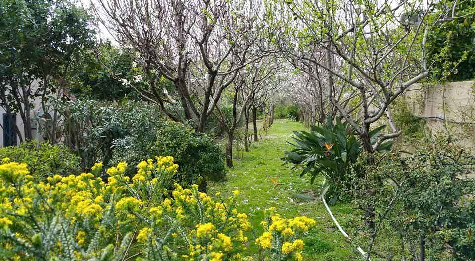 viale-mandorli-autunno-giardino