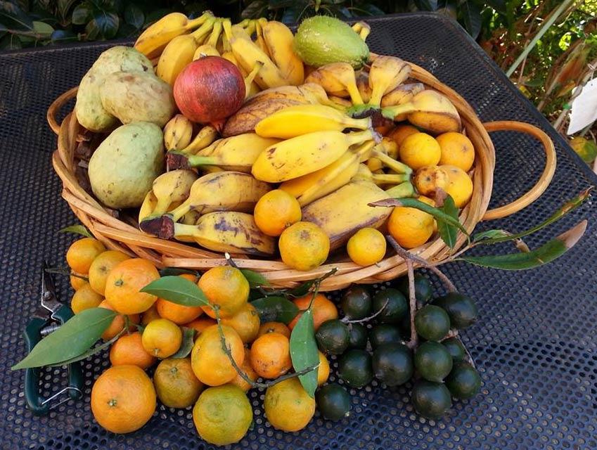 frutta-esotica-stagione-naturale