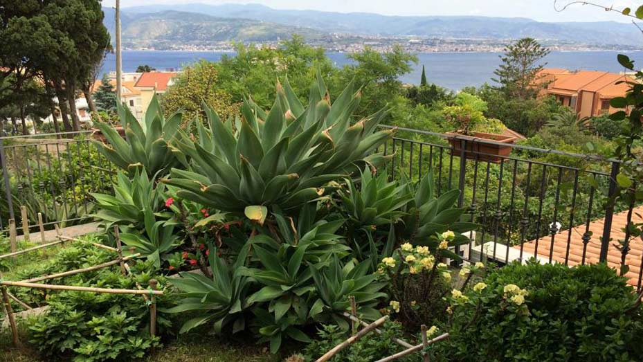 agave-attenuata-balcone-villa