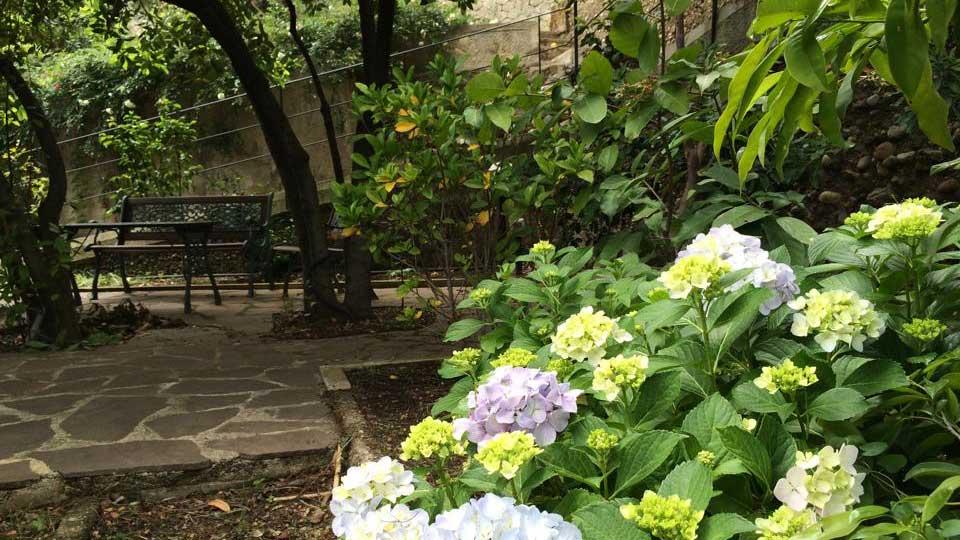 ortensie-azzurre-giardino-panchine